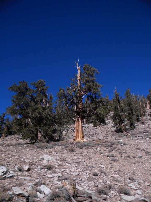 bristlecone pine forest hiking 10 essentials