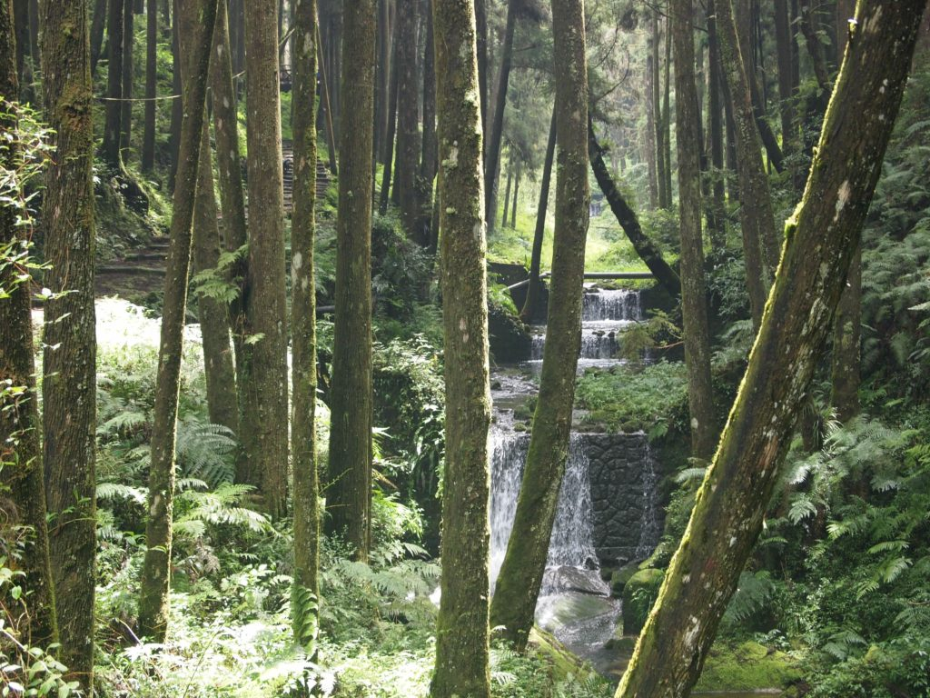 taiwan hiking alishan forest stream expat hikers