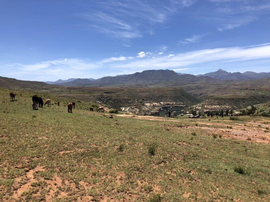Malealea Basotho herder